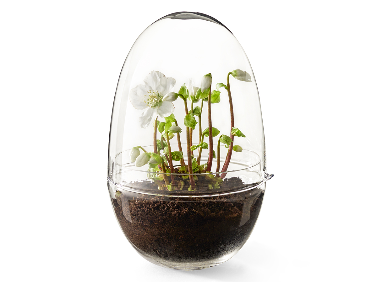 Design House Stockholm Grow Miniväxthus glas XL Extra Stor
